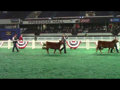 Beef Show, Freedom Hall East - November 14, 2016