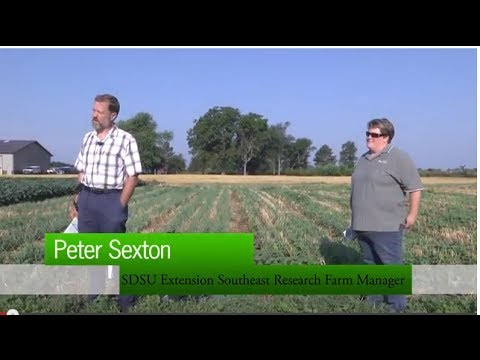 Cover Crops After Small Grains - Volga Farm Tour