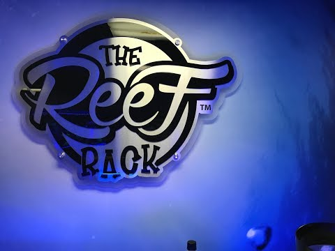 Fish Store Tour   The Reef Rack In Overland Park, KS