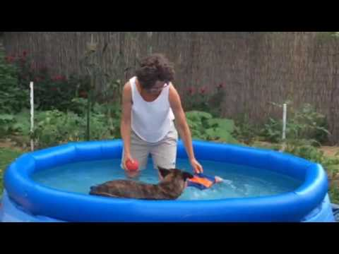 Canine Arthritis Rehab & Metabolic Conditioning for HSA in Intex swimming pool