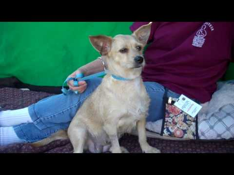 A5036391 Nelly | Norwich Terrier Mix
