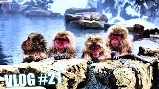 THE ICONIC JAPANESE SNOW MONKEYS | NAGANO | JAPAN VLOG#21