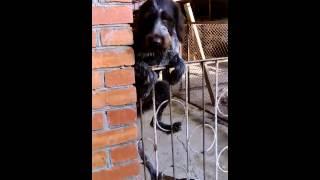 А ваша собака так умеет???)))