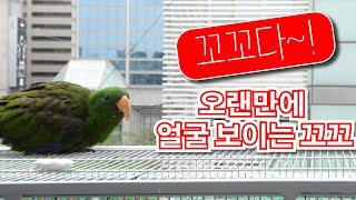 뉴기니아 앵무새 꼬꼬가 살아있어요 ^^