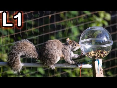Squirrel Obstacle Course - Challenge 1