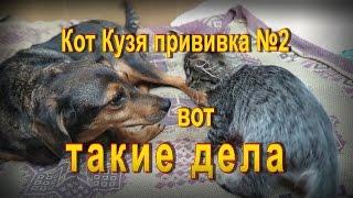 Кот Кузя Прививка  номер два