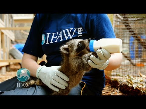 IFAW Rescues, Rehabilitates, & Releases Animals into Habitats We Help Secure