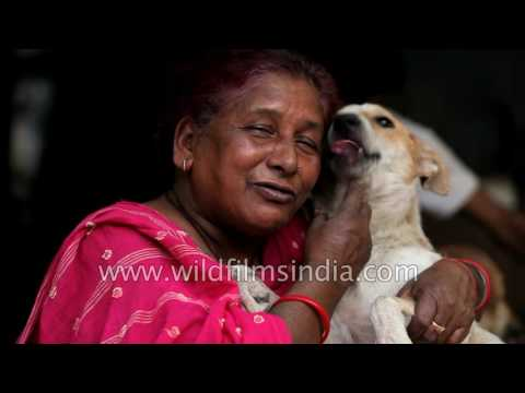 This poor woman feeds the street dogs in her Delhi colony
