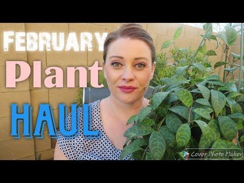 February Plant Haul | 2019