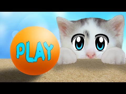 ПРИКОЛЫ с КОТАМИ! КОТ МАЛЫШ И КОШЕЧКА МУРКА! Новые игры с котами и самые смешные приколы