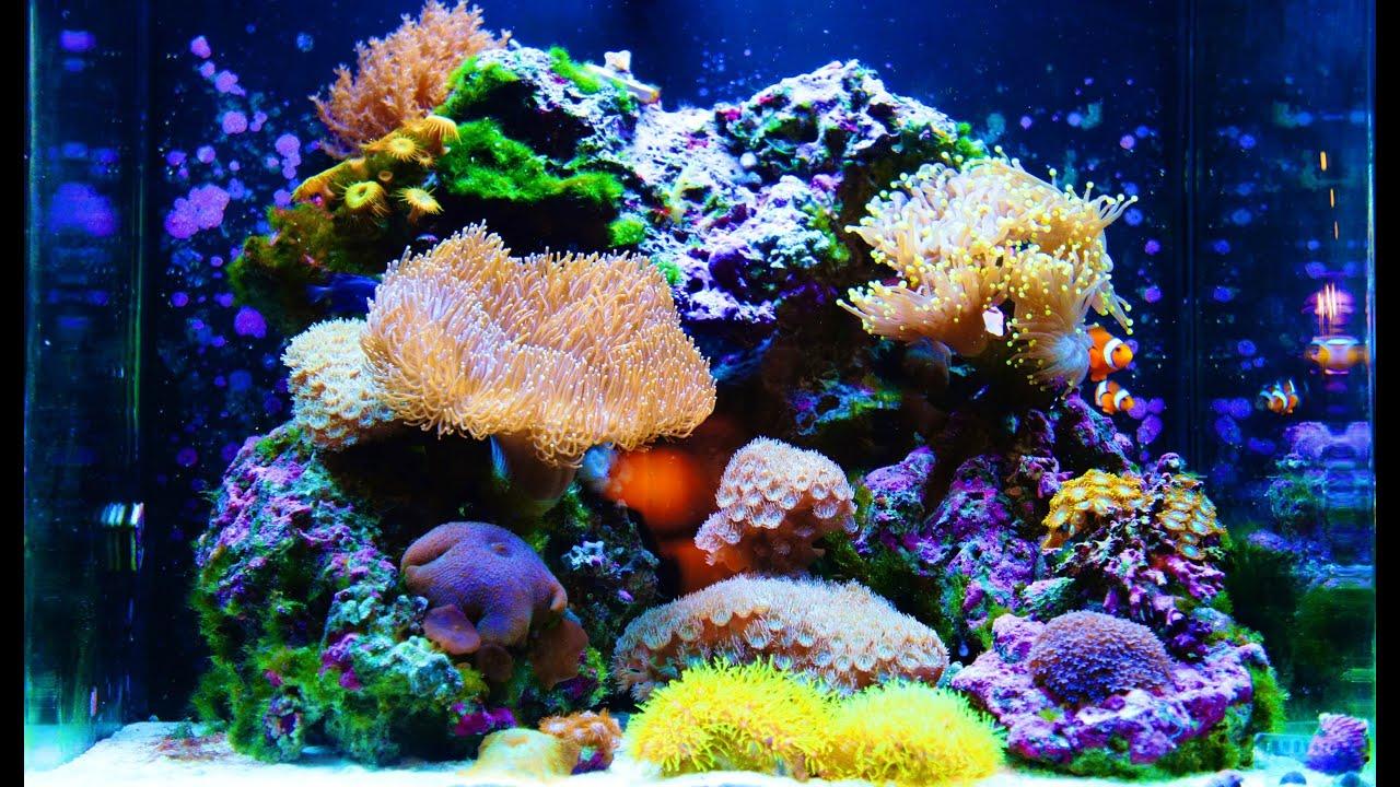 Nuvo 30 Gallon Amazing Aquarium Hd Youtube