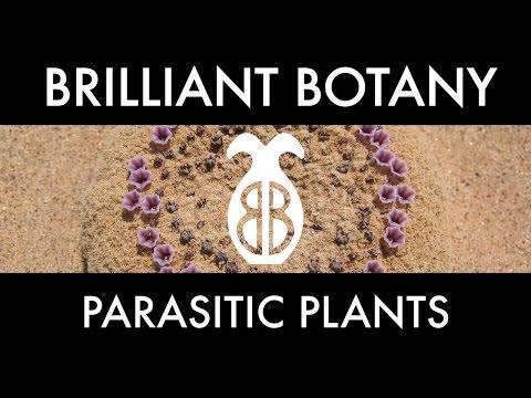 The Weird World of Parasitic Plants