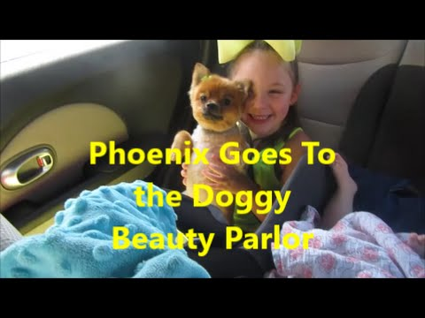Phoenix Goes To the Doggy Beauty Parlor