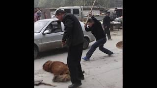 Одиночный пикет в защиту животных в Хабаровске. Стоп Юлинь!