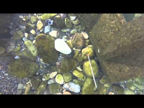 ウナギ穴釣り