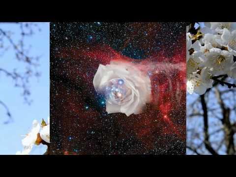креатив фото цветы