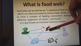 Food chain, Food web and ecological pyramids with examples