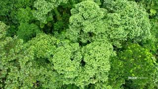 Visual Soundscapes - Jungles   Planet Earth II   BBC America