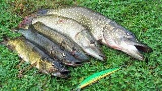 Когда блесна спасла рыбалку! ЛОВЛЯ ЩУКИ с БАЙДАРКИ в ДОЖДЬ