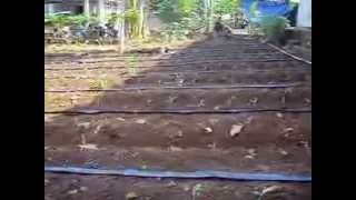 Intalasi Penyiraman pada Budidaya Jagung