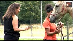 Hästcoach - Bli En Proffessionell Hästterapeut