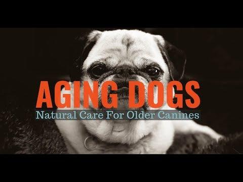Aging Dog - Signs of Aging Dog - Senior Dog Care