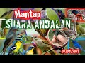 Suara Pikat Burung Andalan Ku  Mp3 - Mp4 Download