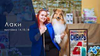 Смотреть видео Выставка 14.10.18 - ЛАКИ онлайн