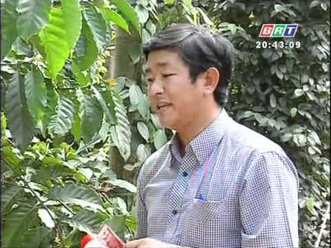 Khuyến nông 7 1 12012 Biện pháp phòng trừ rệp sáp hại cây cà phê