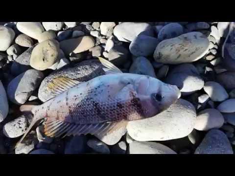 Pêche direct SplashDrone - épisode 4 - Fish On Réunion Island