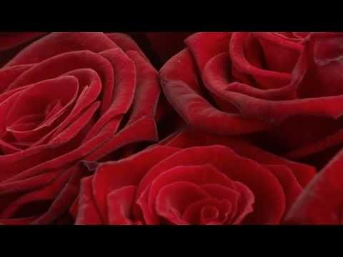 Bed Of Roses Youtube