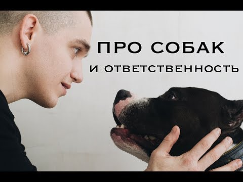 9. Андрей Дед про амстаффа, собак и ответственность