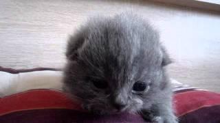 """Котило """"О"""" - едно единствено коте, ама затова пък Какво Коте ! (Котоошу !)"""