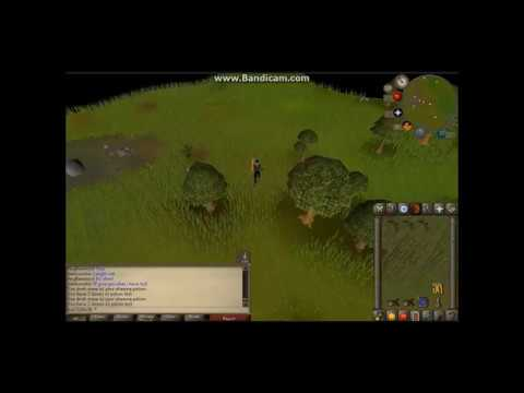 Where To Find And How To Catch Copper Longtails- OSRS