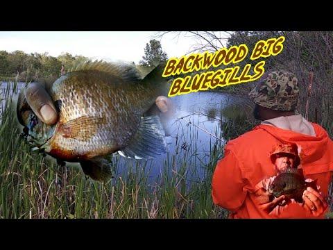🌲 BACKWOOD BIG BLUEGILLS 🌲 Niagara Falls 😱 BASS TRY TO EAT BLUEGILL 😱 Crappie Town USA Baby