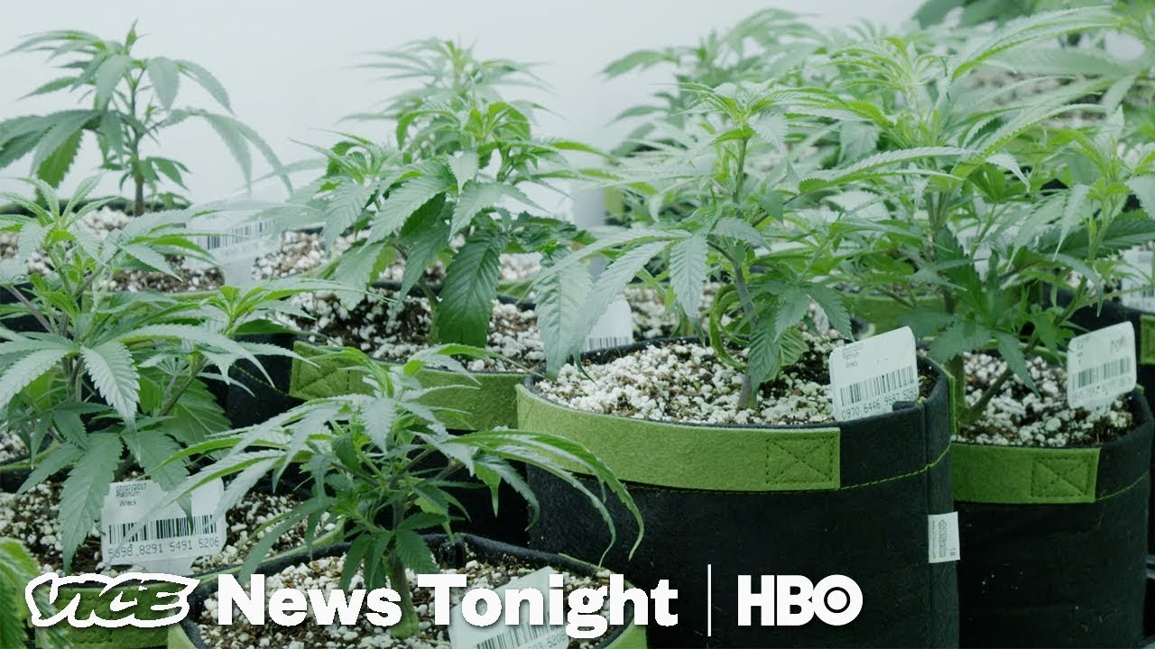Californians Can Now Get Rid Of Their Old Weed Convictions (HBO)