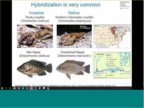 David Lodge: Invasions & Extinctions of Species