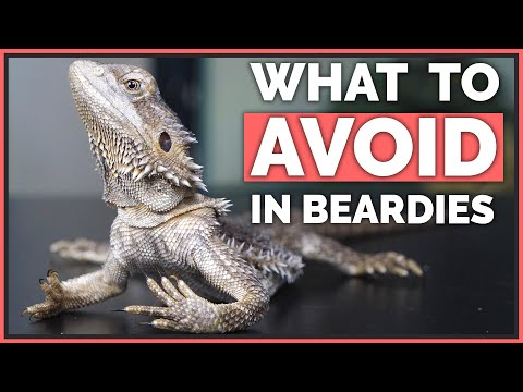 How NOT To Care For Bearded Dragons - Mistakes To Avoid!