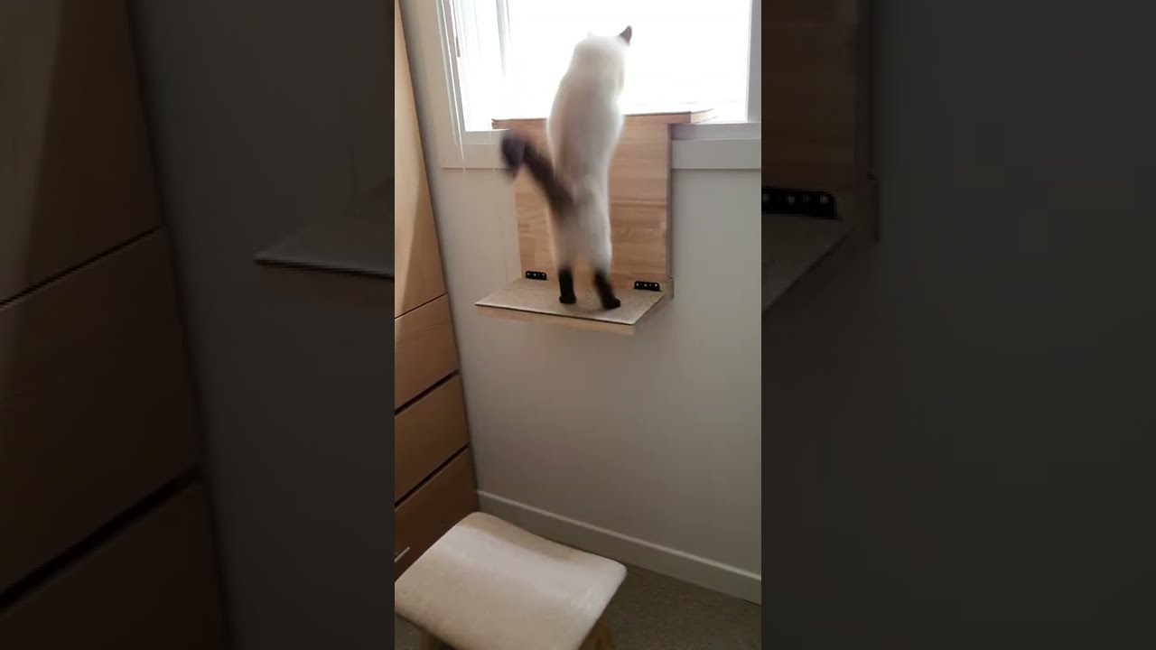DIY Cat Window Step (Curry the Cat) #shorts