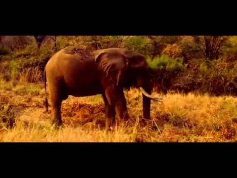 """Zimbabwe 2013 """"This is Africaaaaaa"""""""