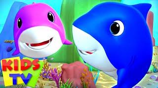 Laughing Shark Song | Baby Shark Family | Nursery Rhymes & Songs for Children - Kids Tv.