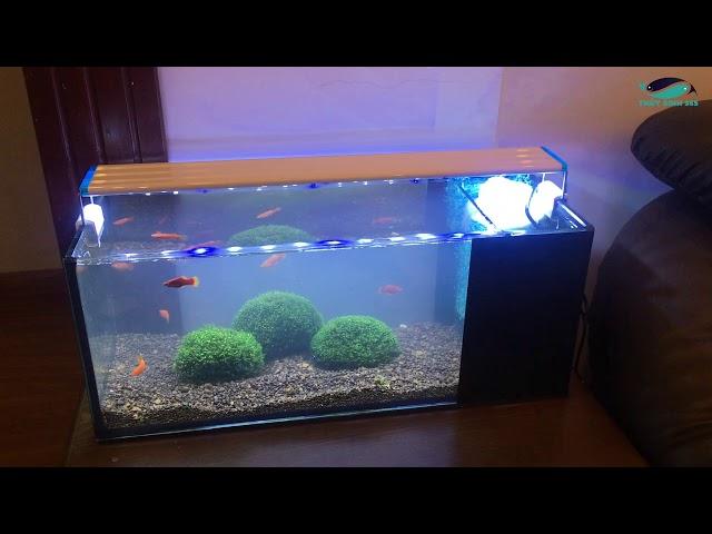 Full set bể cá mini bao gồm cả cây thủy sinh