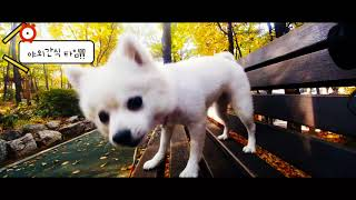 http://pf.kakao.com/_eaexfxl (플러스친구맺기) http://moondog.modoo....