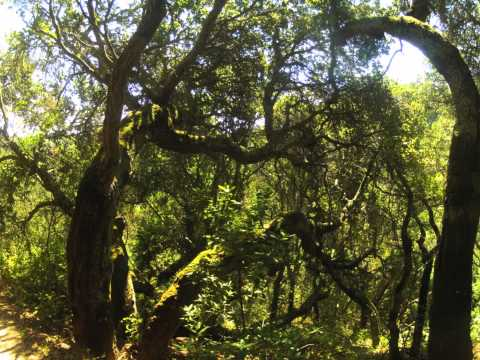 Oakland Redwoods Regional Park