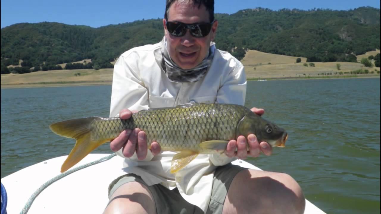 Dry fly fishing for carp at lake henshaw youtube for Lake henshaw fishing