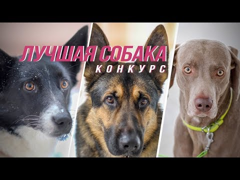 «Лучшая собака Onliner»: финал конкурса
