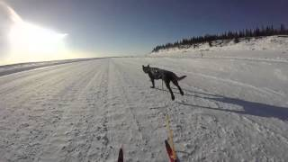 Skijoring the Ice Road