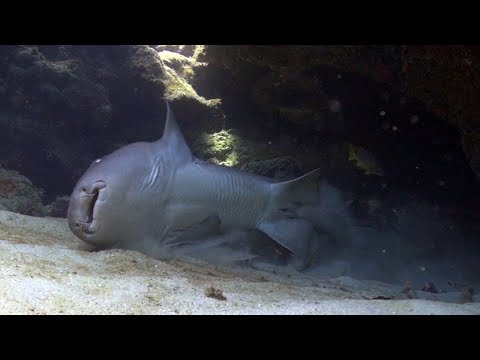 Scuba Diving Doc Poulson and Eden Rock Grand Cayman
