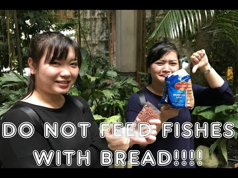 DO NOT FEED THE FISHES WITH BREAD!!!!