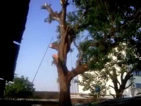 Cortar rbol de 12 m en el patio de la casa youtube - Casas en el arbol ...